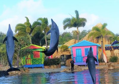 gold-coast-seaworld-dolphin-show