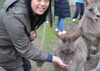 melbourne-hand-feeding-kangaroo